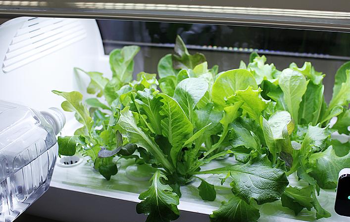 【編集部が試してみた】スマート菜園「foop」でレタスを育ててみました!