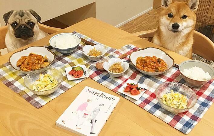 【きのう何食べた?】安くておいしい!シロさんの手料理をおうちで再現!