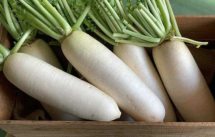 ニッポンのおいしい、いただきます! ~加賀野菜の魅力に迫る Vol.3~