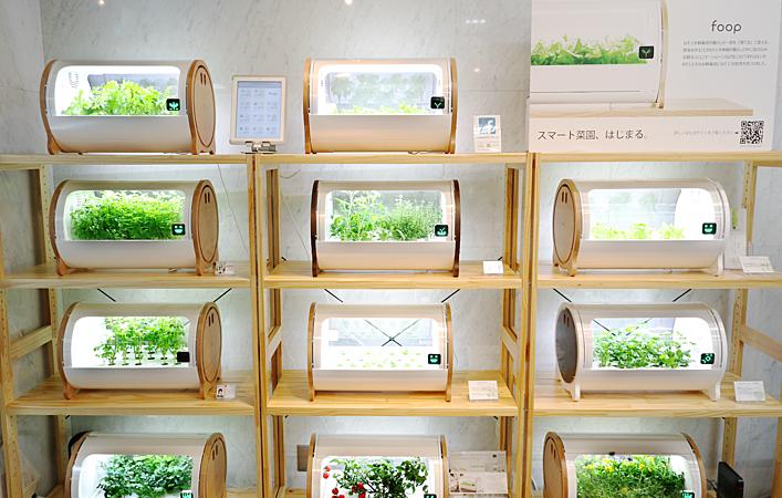 室内でおしゃれに野菜を育てる。スマート菜園「foop」に注目!