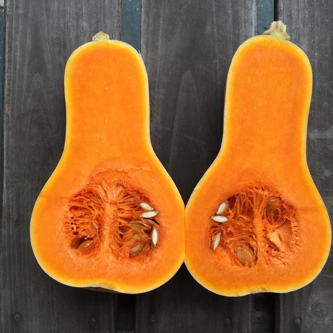 ひょうたん かぼちゃ